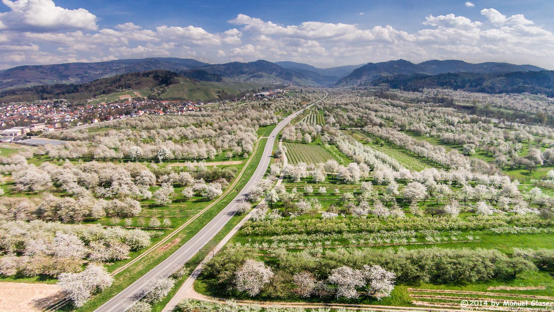 Kirschblütenmeer 2.0