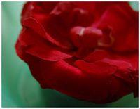 Kirschgrün Rosarot