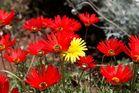 Kirstenbosch National Botanical Gardens 27