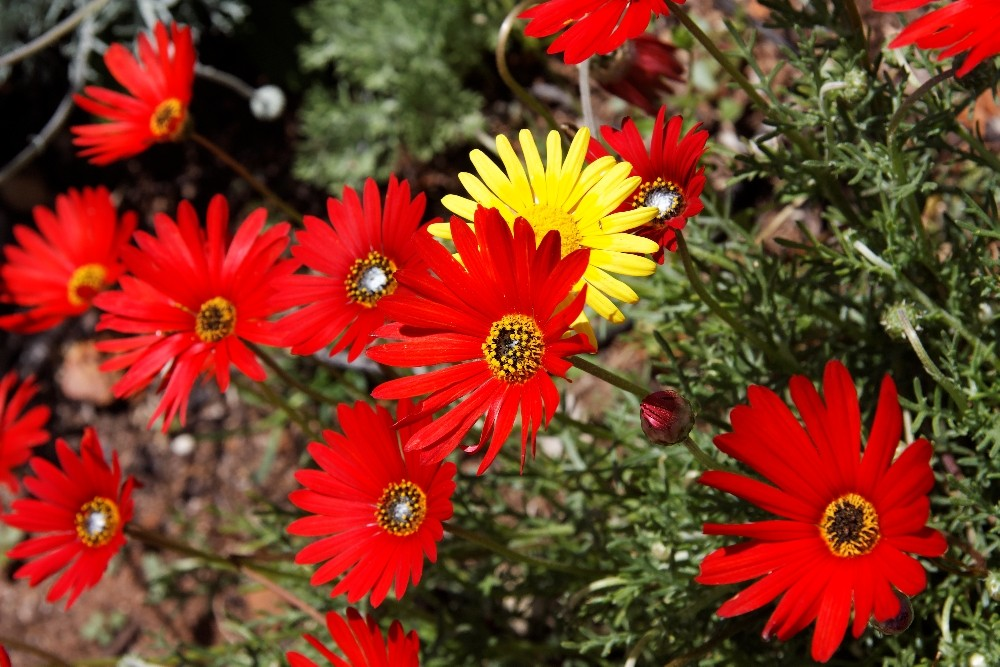 Kirstenbosch National Botanical Gardens 28