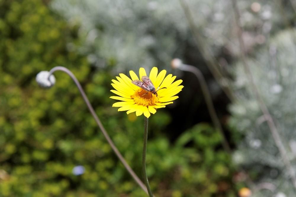 Kirstenbosch National Botanical Gardens 29