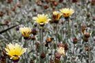 Kirstenbosch National Botanical Gardens 37