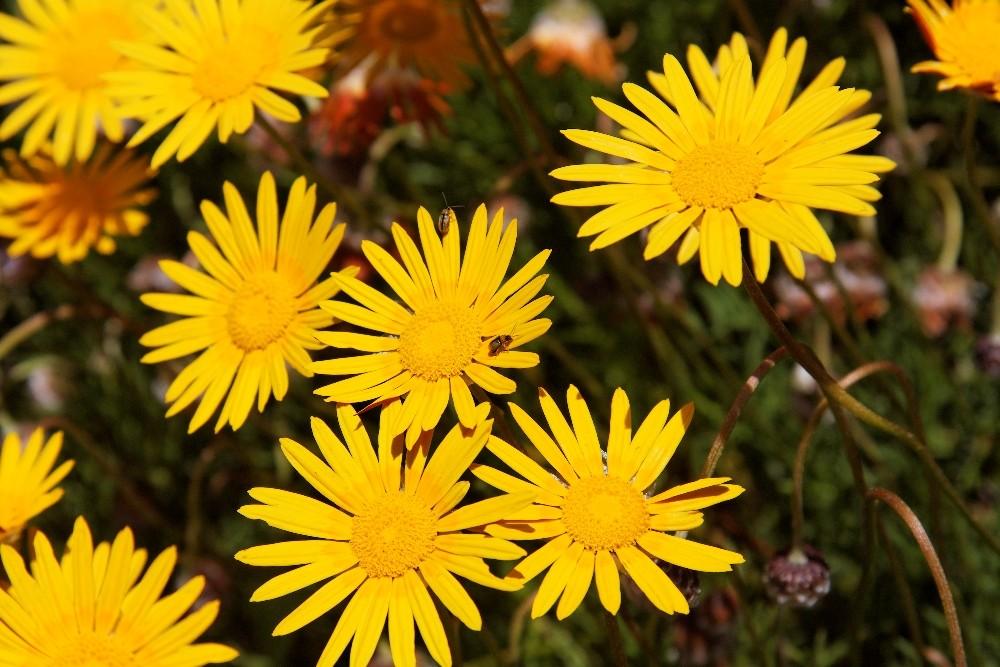 Kirstenbosch National Botanical Gardens 41