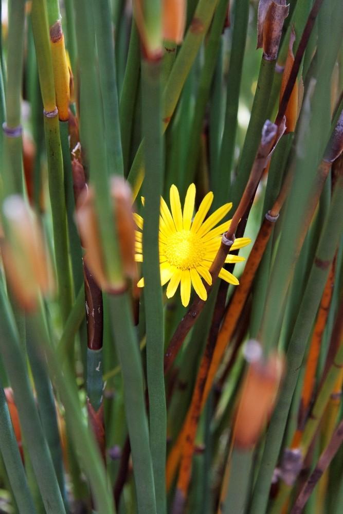 Kirstenbosch National Botanical Gardens 52