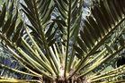 Kirstenbosch National Botanical Gardens 54