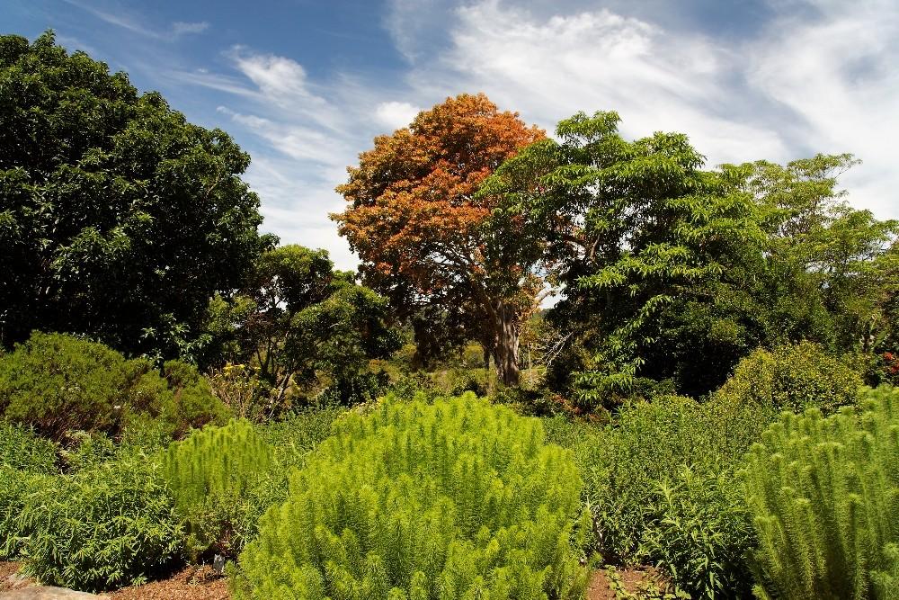 Kirstenbosch National Botanical Gardens 59