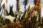 Kirstenbosch National Botanical Gardens 64