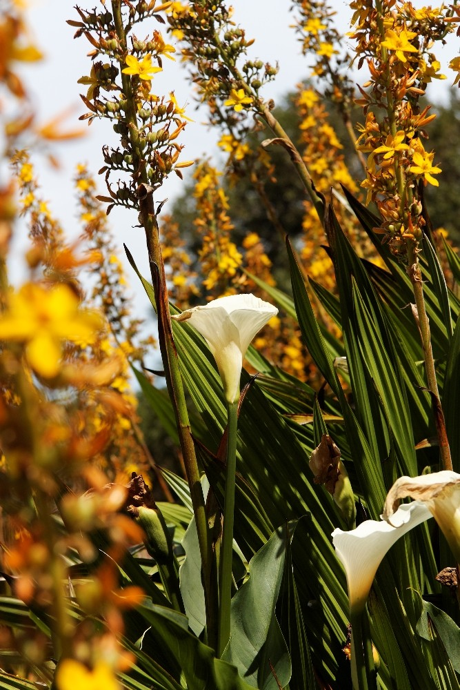Kirstenbosch National Botanical Gardens 65