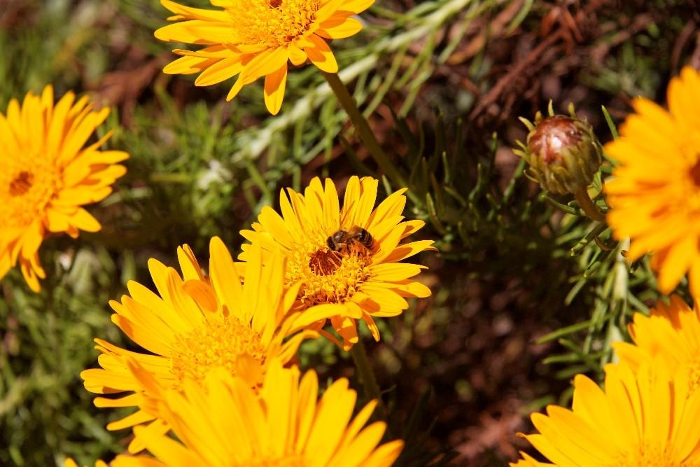 Kirstenbosch National Botanical Gardens 66