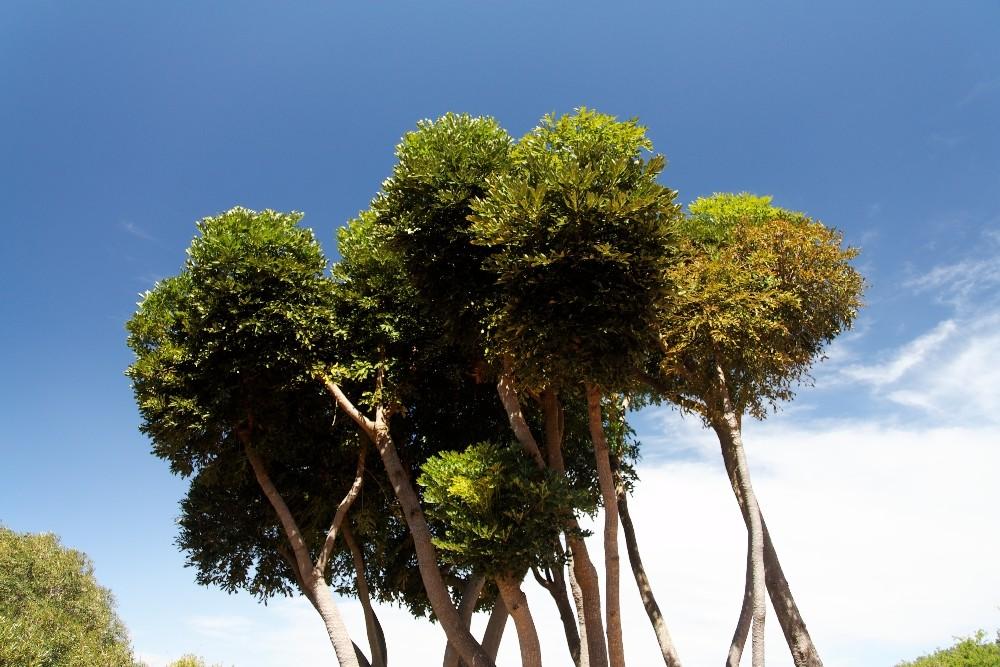 Kirstenbosch National Botanical Gardens 69