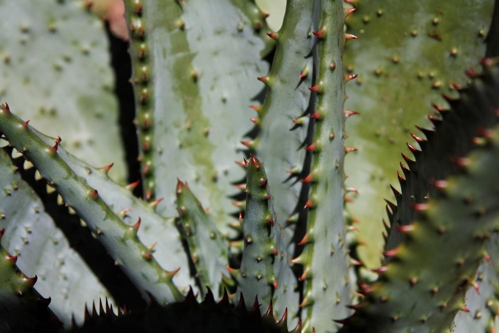 Kirstenbosch National Botanical Gardens 70