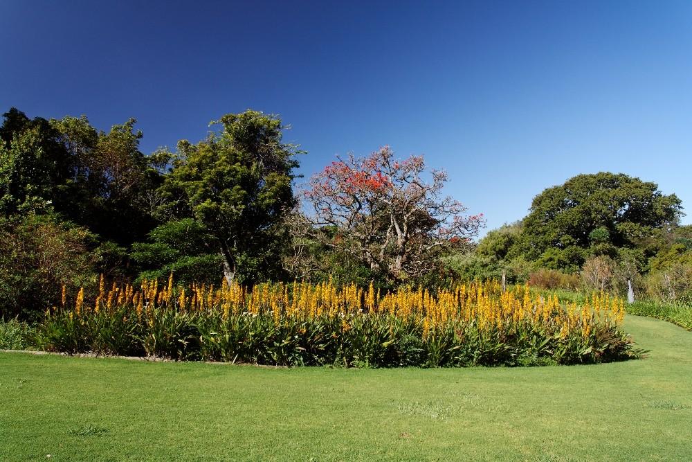 Kirstenbosch National Botanical Gardens 78