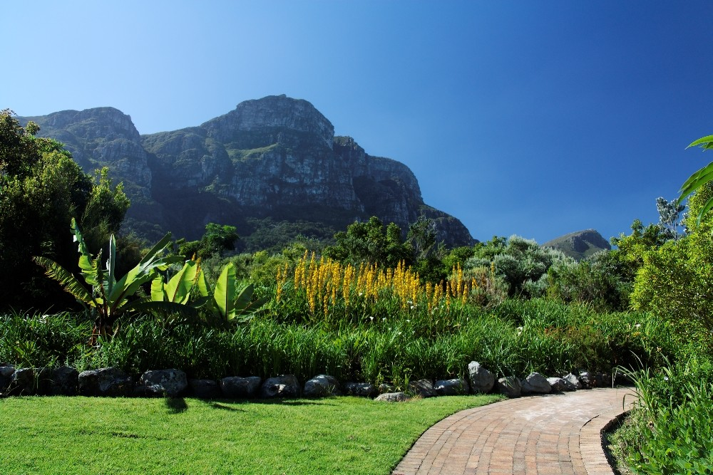 Kirstenbosch National Botanical Gardens 79