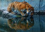 Kiss Me Tiger - wow wow wow