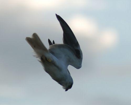 Kite going down