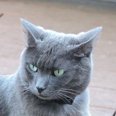 Kithy en colère