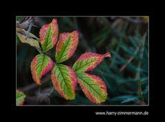 kitschiger Herbst