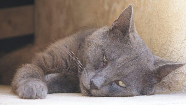 Kitte Cat