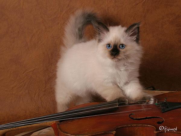 kitten Fester
