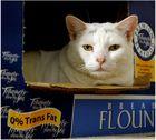 Kittie in a box