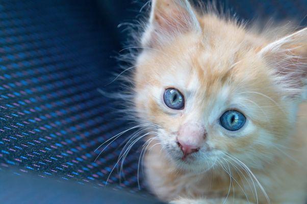 Kitty 2 !