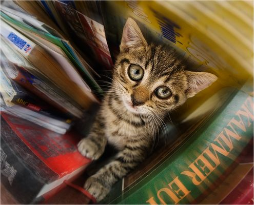 Kitty book worm