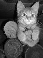 KITTY ....