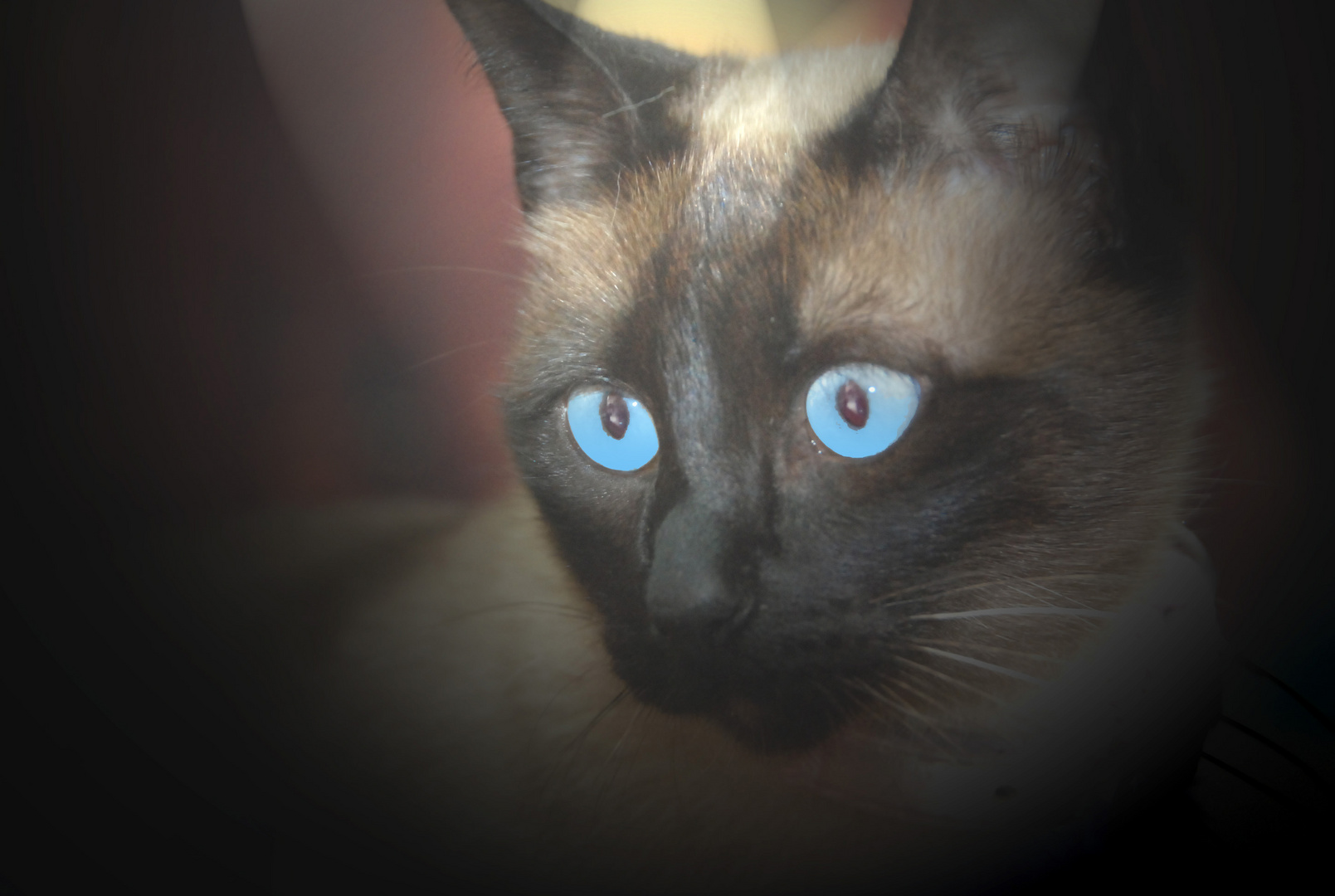 Kitty en la sombra
