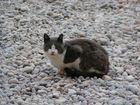 Kitty in the Kies