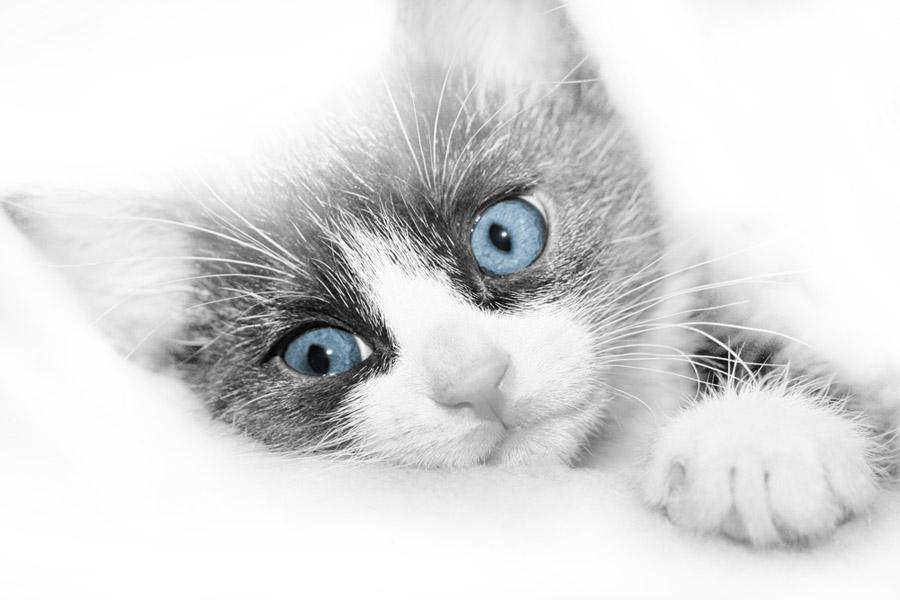 Kitty in Weiss