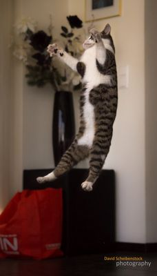 kitty jump around