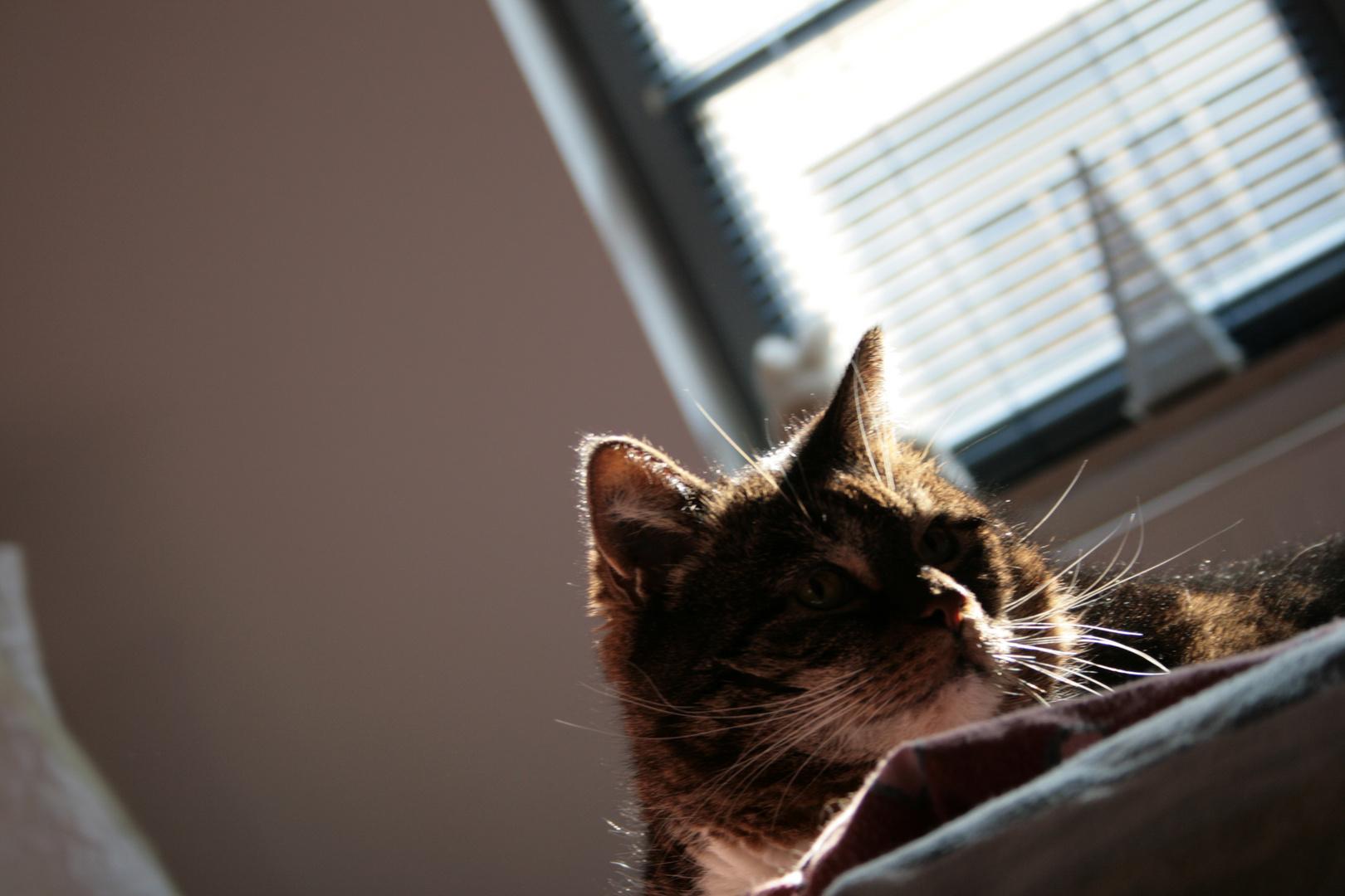 Kitty Kat ( Mika )