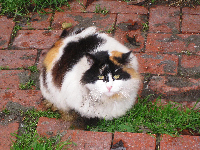 Kitty Kitty Kit Kit
