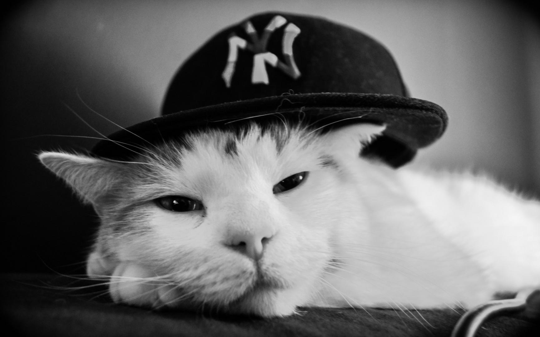 Kitty mit Cap