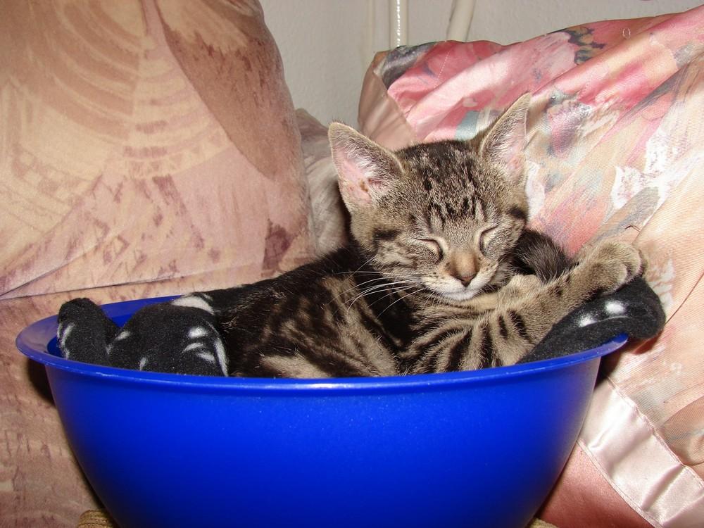 Kitty sleeping in the Schüssel...
