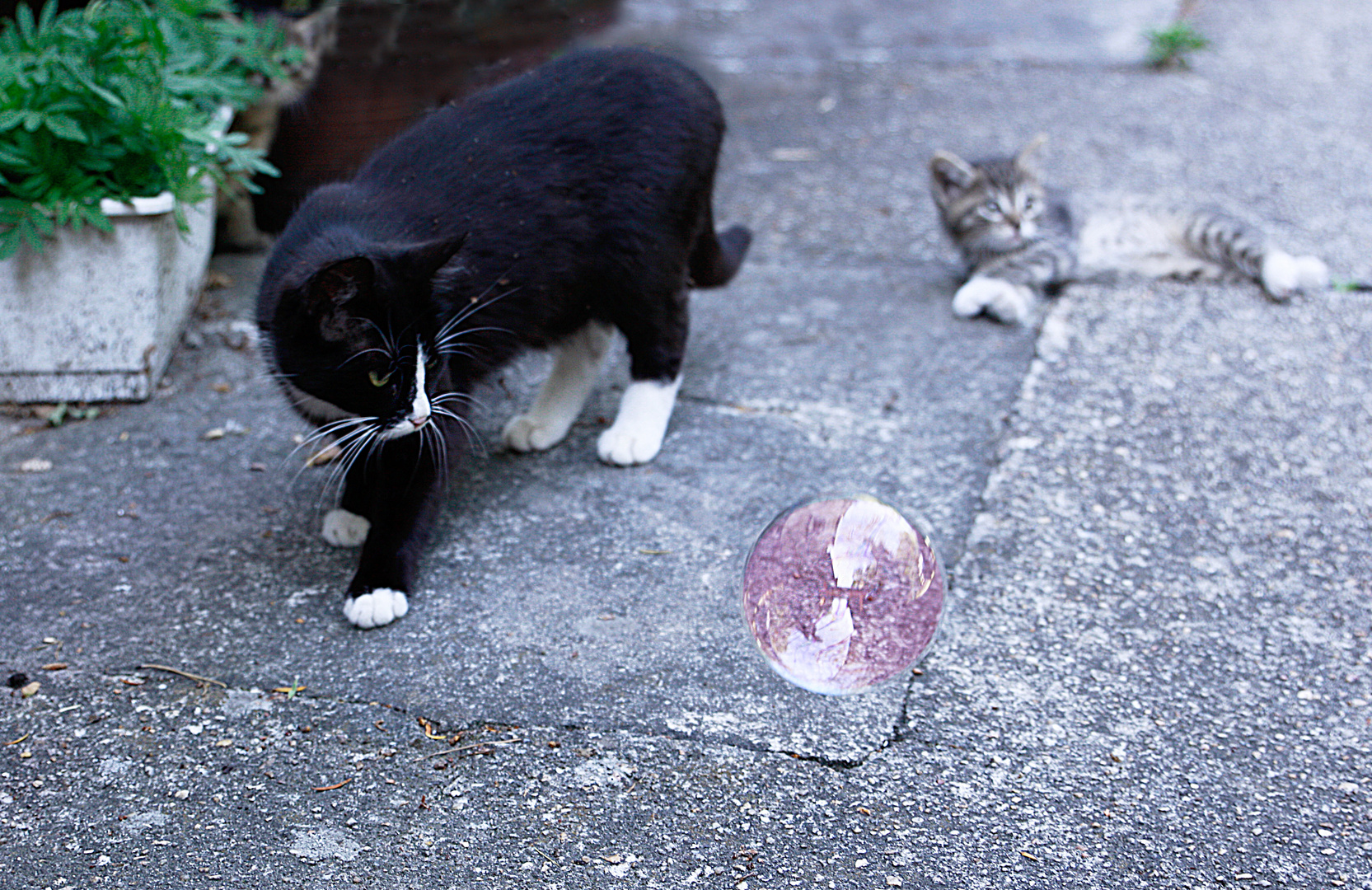 Kitty und Seifenblasen