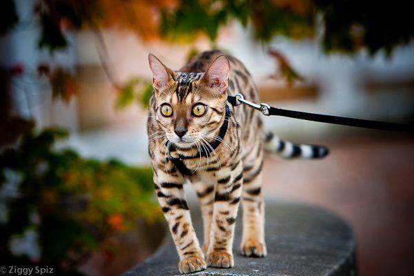 Kitty's outdoor adventures