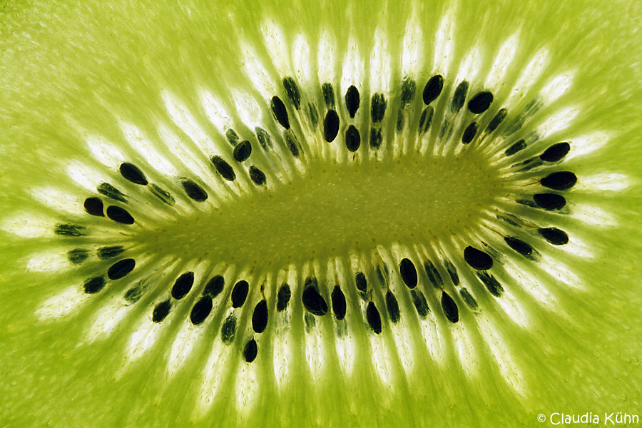 Kiwi im Detail