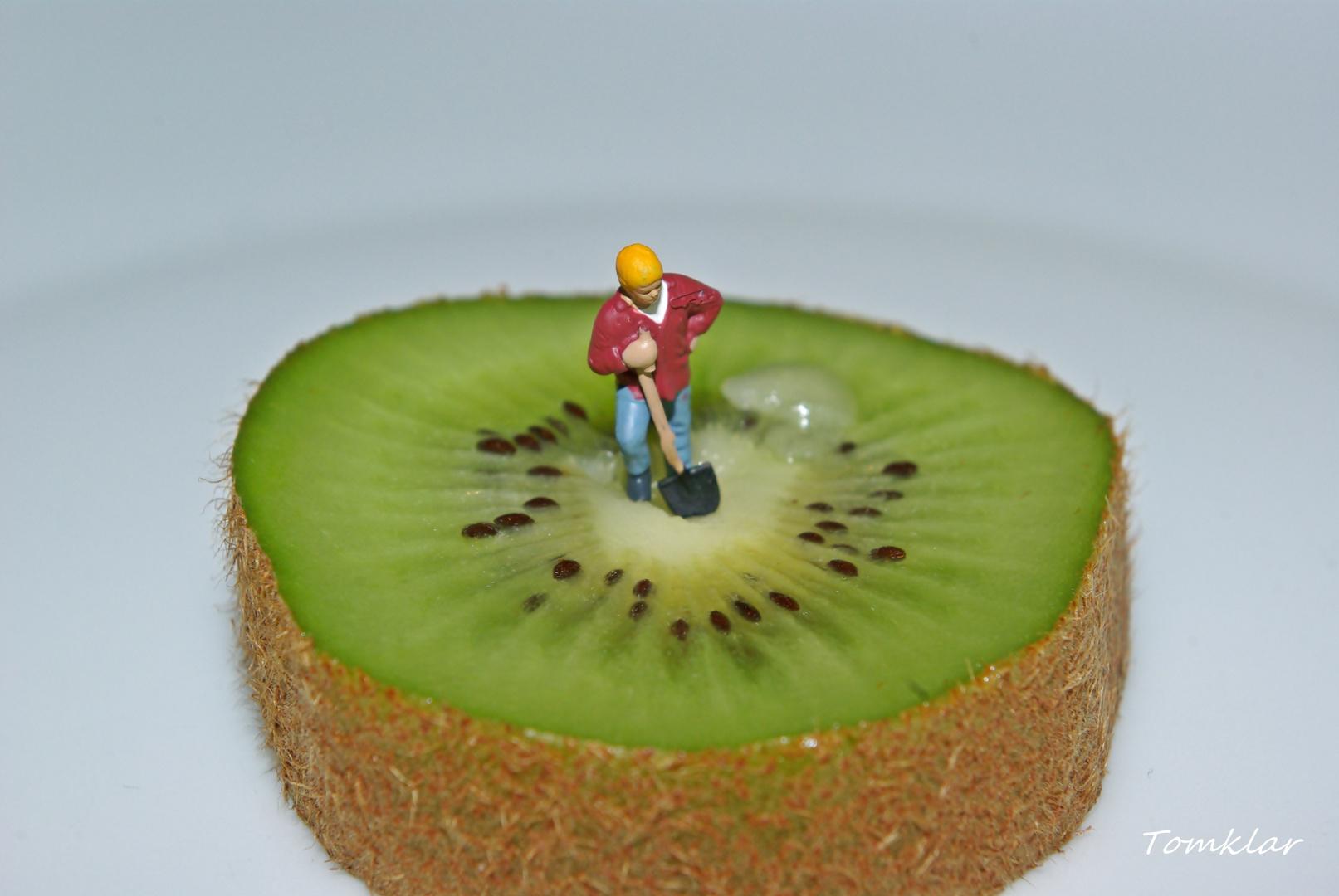 Kiwi Plantagen Arbeiter