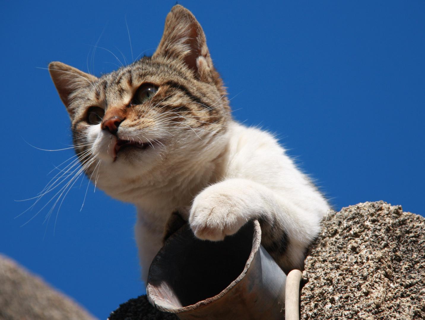 klagende katze auf dem kabeldach 2