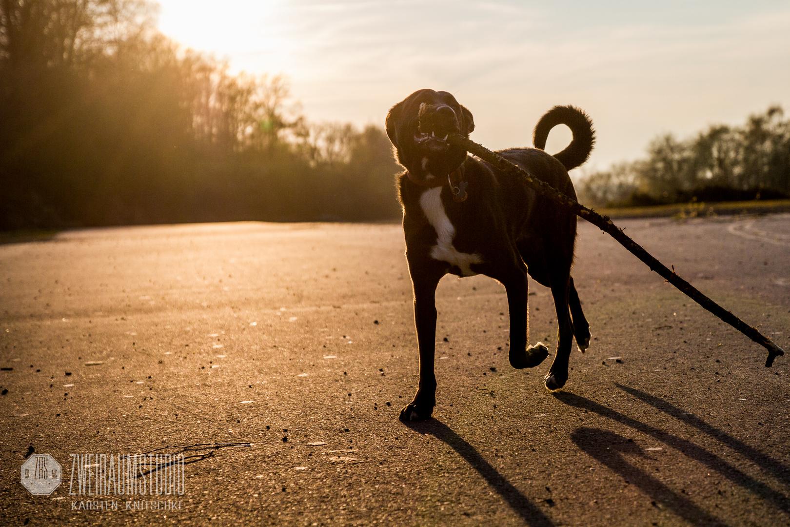 Klasse Sonnenuntergangs spaziergang