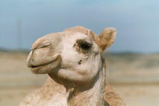 klassikerfoto des pauschaltouristen in ägypten