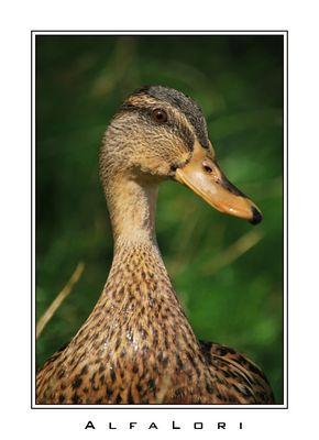 Klassische Ente