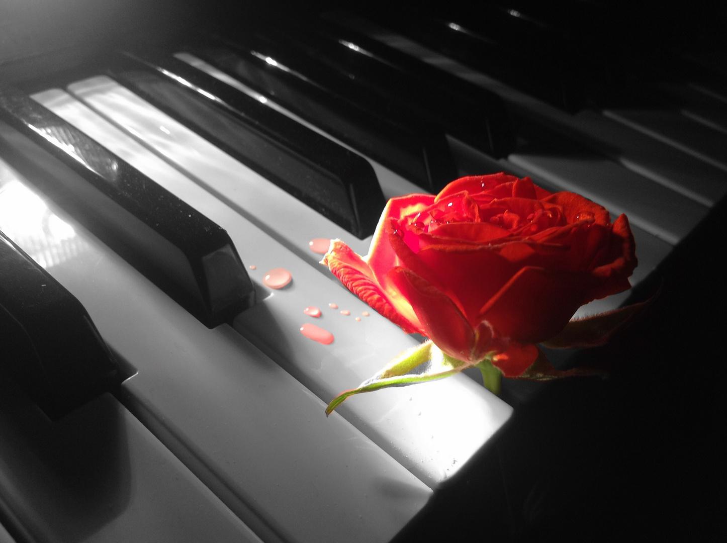 Klavier und rote Rose