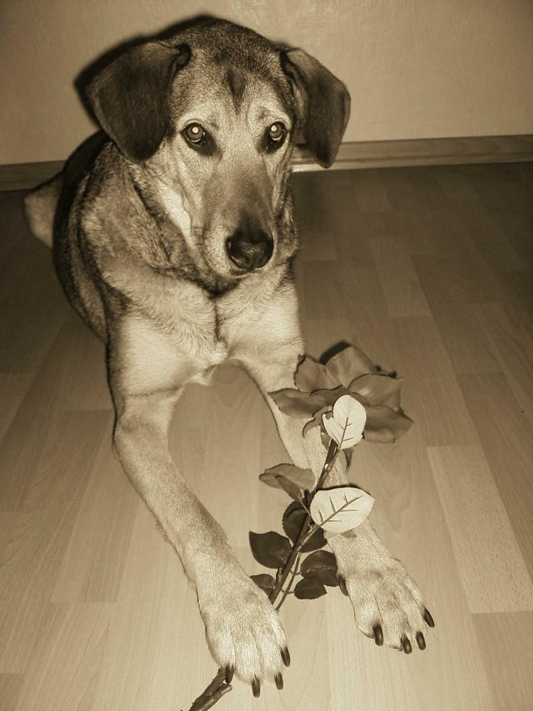 kleener rosenkavalier :-)