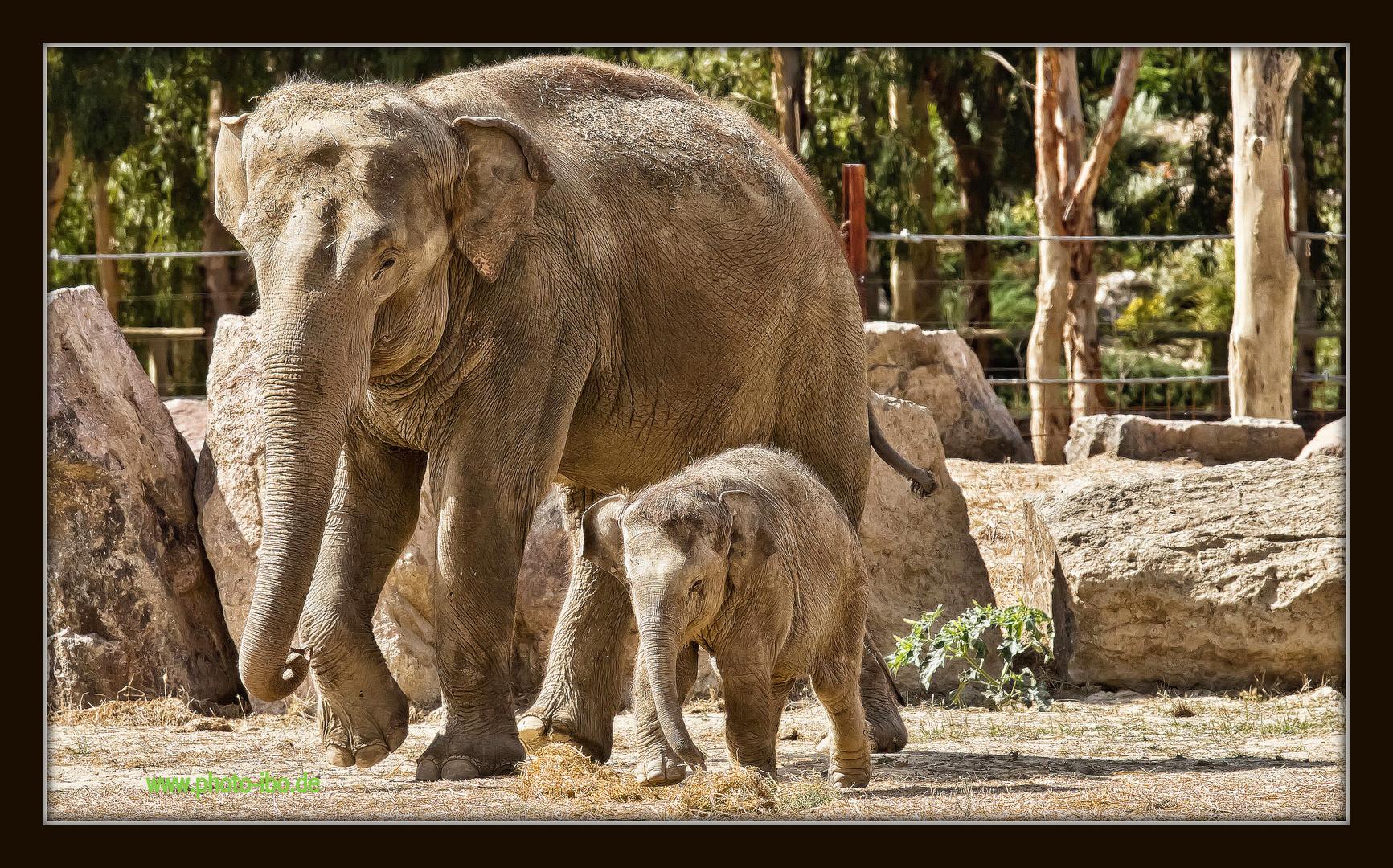..klein Elephant heit Izmir und ist dort auch im Zoo