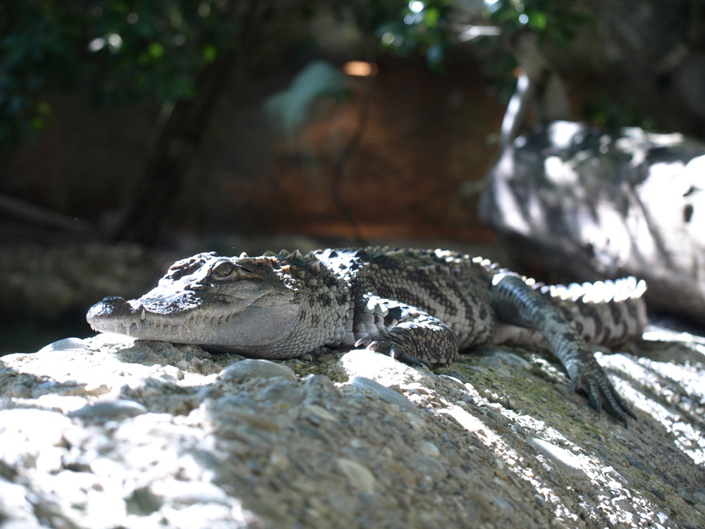 Klein-Kroko