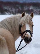klein Leon im Schnee
