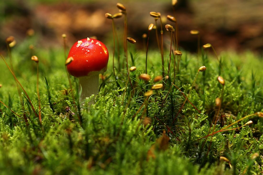 klein-schön und giftig