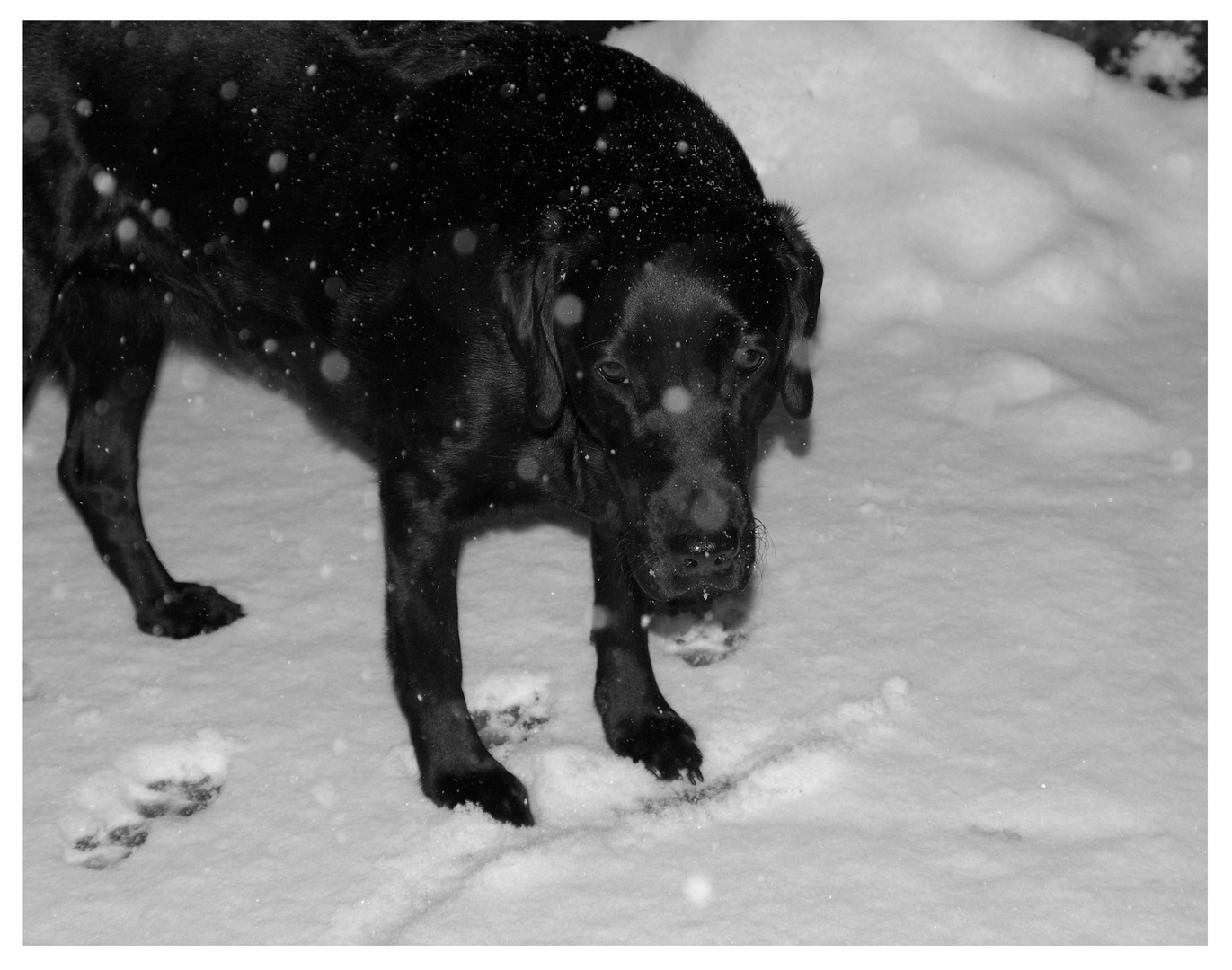 Klein Sooz im Schnee